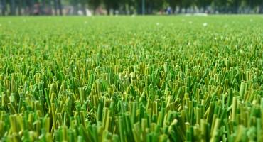 GreenFields MX - Rapid Wien
